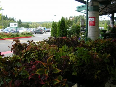 Coleus Plants at Central Market in Poulsbo