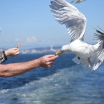Seagull Feeding by Stephen Phayre